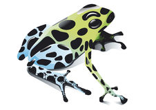 Poison frog royalty free illustration