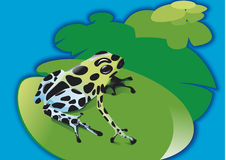 Poison frog on waterlily Stock Photo