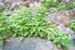 Poison ivy in sandstone canyon Stock Photos