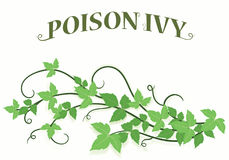 Poison Ivy Vines Background. Poison ivy background with viney title stock illustration
