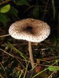 Poison mushroom. In forest danger vegetable summer plant wild rainforest royalty free stock photo