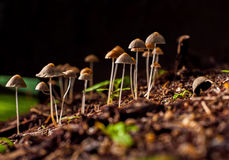 Poison mushroom. On graven with black background royalty free stock photography