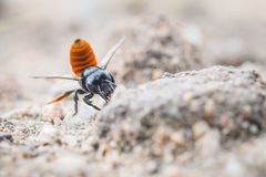Poison needle insect Royalty Free Stock Images