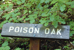 Poison oak. Sign in a patch of poison oak stock photos