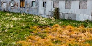 Poisoned困厄了转动各种各样的树荫黄色,橙色的高草和绿色在一个被毁坏的生锈的罐子大厦后 免版税库存图片