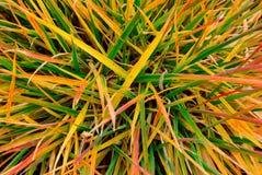 Poisoned困厄了转动各种各样的树荫黄色,橙色,红色的高草和绿色 免版税库存照片