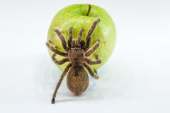 Tarantula on apple Royalty Free Stock Photography