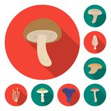 Poisonous and edible mushroom flat icons in set collection for design. Different types of mushrooms vector symbol stock. Illustration Royalty Free Stock Photo