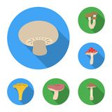 Poisonous and edible mushroom flat icons in set collection for design. Different types of mushrooms vector symbol stock. Illustration Stock Photo
