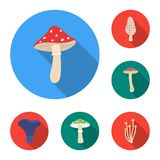 Poisonous and edible mushroom flat icons in set collection for design. Different types of mushrooms vector symbol stock. Illustration Stock Photography