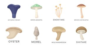 Poisonous and edible mushroom icons in set collection   Stock Photos