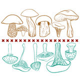 Poisonous and edible mushrooms vector table on Stock Photography