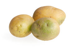Poisonous green potatoes Stock Images
