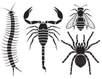 Poisonous insects set. Vector. Stock Images