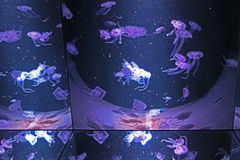 Poisonous jellyfish in an aquarium Stock Photo