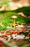 Poisonous mushroom Stock Image