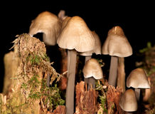 Poisonous mushrooms Stock Image