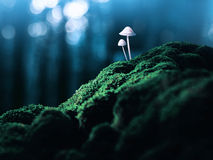 Poisonous mushrooms in the faraway forest Royalty Free Stock Photos