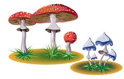 Poisonous mushrooms with grass Stock Photography