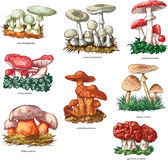 Poisonous mushrooms. Vector collection of 8 poisonous mushrooms Royalty Free Stock Image
