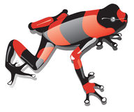 Poisonous red-black frog. Isolated illustration Royalty Free Stock Photography
