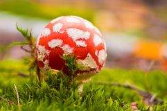Beautiful closeup of forest mushrooms stock photo