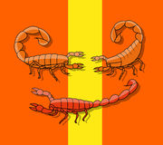 Poisonous Scorpions Stock Images