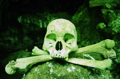 Poisonous Skull Stock Images