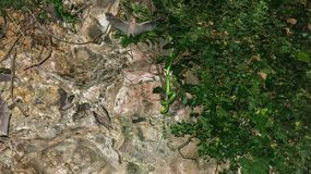 A poisonous snake hidden in a tropical vegetation in a cave lurks for its prey. Bats fly in a cave around a snake waiting for its royalty free stock image