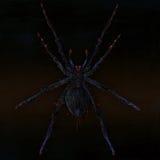 Poisonous spider. Royalty Free Stock Photos