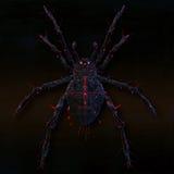 Poisonous spider. Stock Photos