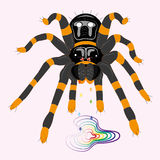 Poisonous spider tarantula. Royalty Free Stock Photography