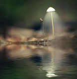 Poisonous  white mystical picture mushrooms Stock Image
