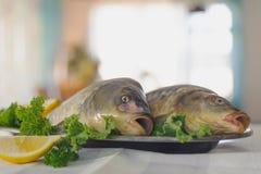 Poisson cru sur le plat métallique avec des verts et citron sur la table blanche indoors image stock