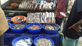 Poisson de mer à vendre photos stock