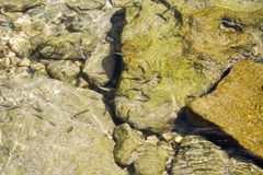 Poisson de mer Image libre de droits
