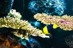 Poisson de mer et corail Photos libres de droits