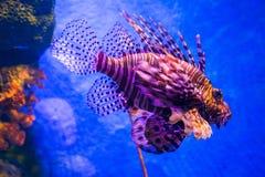 Poisson de mer et corail Image libre de droits