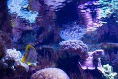 Poisson de mer lumineux et corail et polypes marins d'invertébrés Photographie stock libre de droits