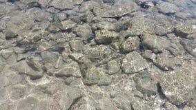 Poisson de mer rouge dans l'eau Égypte photographie stock