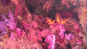 Poisson de mer Vue de mer Vidéo sous-marine Eau Plongée sous l'eau clips vidéos
