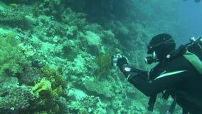 Poisson de mer Vue de mer Vidéo sous-marine Eau Plongée sous l'eau banque de vidéos