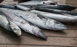 Poisson frais étendu sur le dock - sériole photographie stock libre de droits