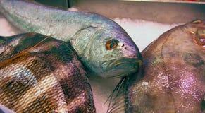 Poisson frais au marché espagnol de fruits de mer photo libre de droits
