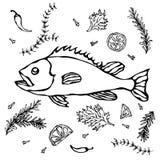 Poisson frais avec les épices et le citron d'herbes Illustration réaliste de fruits de mer de vecteur Images libres de droits