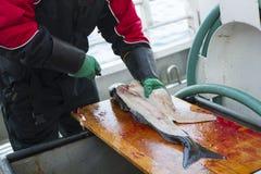 Poisson frais de nettoyage d'homme au bateau de pêche Photo stock