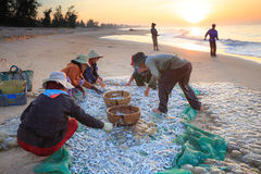 Poisson frais de récolte pêché en mer Photographie stock libre de droits