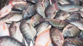Poisson frais de tilapia du Nil en vente images stock