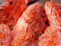 Poisson frais directement de la mer, à la poissonnerie de Marsalok, Malte Photographie stock libre de droits