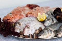 Poisson frais, mollusques et crustacés et fruits de mer Photographie stock libre de droits
